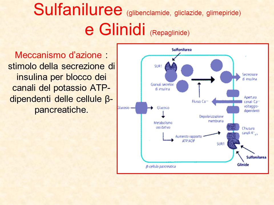 Sulfaniluree (glibenclamide, gliclazide, glimepiride) e Glinidi (Repaglinide) Meccanismo d'azione : stimolo della secrezione di insulina per blocco de