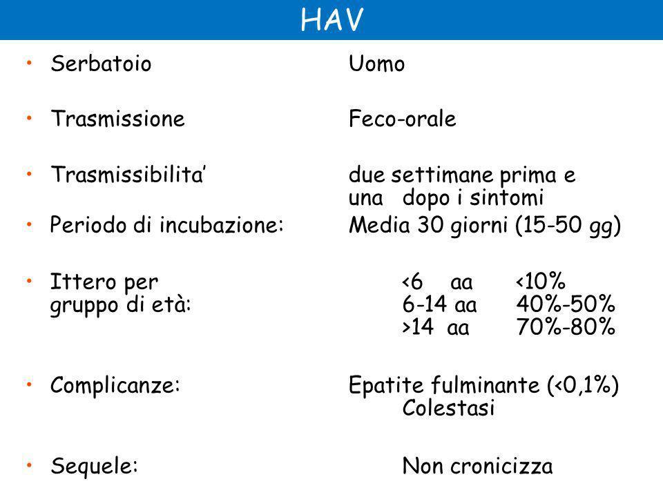 SerbatoioUomo Trasmissione Feco-orale Trasmissibilita' due settimane prima e unadopo i sintomi Periodo di incubazione:Media 30 giorni (15-50 gg) Ittero per 14 aa 70%-80% Complicanze:Epatite fulminante (<0,1%) Colestasi Sequele:Non cronicizza
