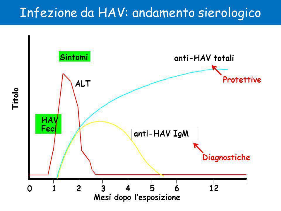 HAV Feci Sintomi ALT anti-HAV IgM anti-HAV totali Mesi dopo l'esposizione Titolo 0123 4561224 Infezione da HAV: andamento sierologico Protettive Diagnostiche
