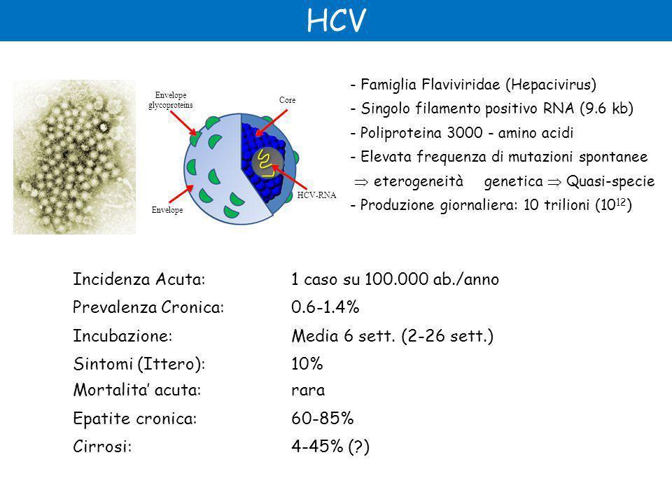Incidenza Acuta: 1 caso su 100.000 ab./anno Prevalenza Cronica: 0.6-1.4% Incubazione:Media 6 sett.