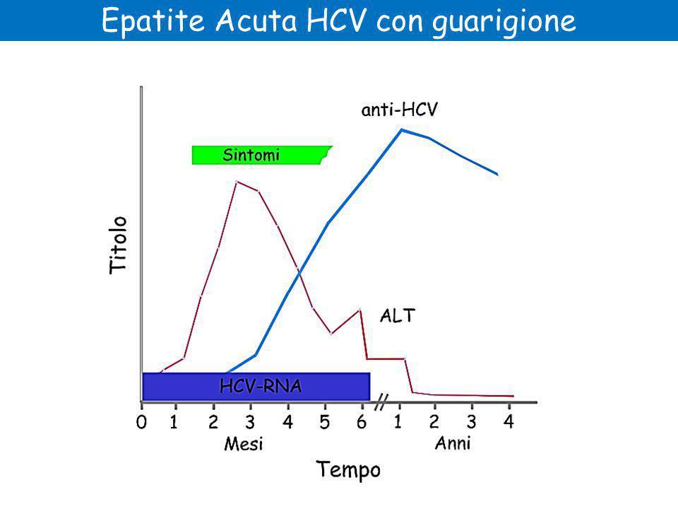Epatite Acuta HCV con guarigione