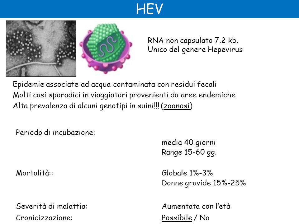 HEV Periodo di incubazione: media 40 giorni Range 15-60 gg.