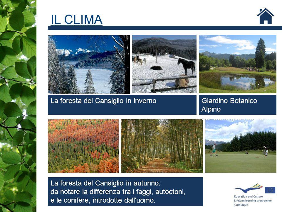 IL CLIMA Giardino Botanico Alpino del Cansiglio (sopra) La foresta del Cansiglio in autunno: da notare la differenza tra i faggi, autoctoni, e le coni