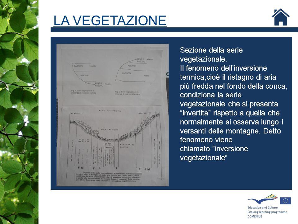 Sezione della serie vegetazionale. Il fenomeno dell'inversione termica,cioè il ristagno di aria più fredda nel fondo della conca, condiziona la serie