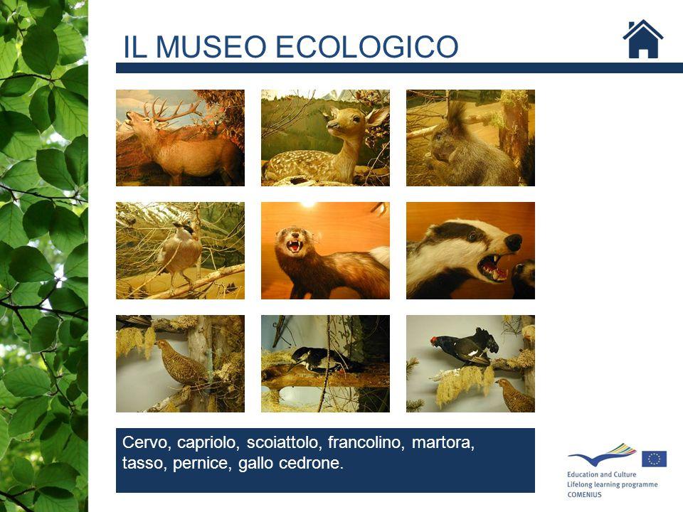 SCOIATTOLO IL MUSEO ECOLOGICO Cervo, capriolo, scoiattolo, francolino, martora, tasso, pernice, gallo cedrone.