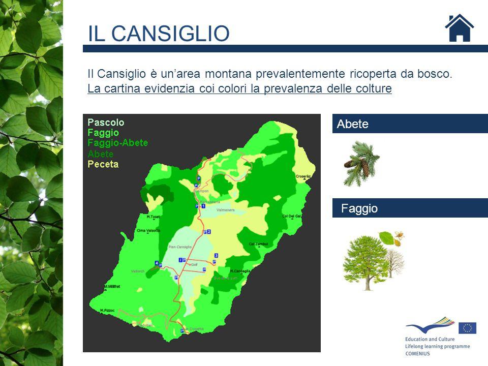 Il Cansiglio è un'area montana prevalentemente ricoperta da bosco. La cartina evidenzia coi colori la prevalenza delle colture Abete Faggio IL CANSIGL