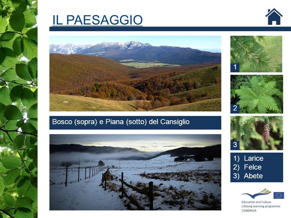 IL PAESAGGIO Bosco (sopra) e Piana (sotto) del Cansiglio 1)Larice 2)Felce 3)Abete rosso 2 3 1
