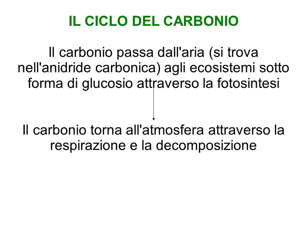 IL CICLO DEL CARBONIO Il carbonio passa dall aria (si trova nell anidride carbonica) agli ecosistemi sotto forma di glucosio attraverso la fotosintesi Il carbonio torna all atmosfera attraverso la respirazione e la decomposizione