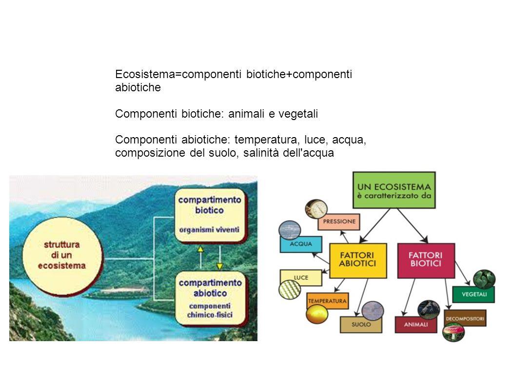 Ecosistema=componenti biotiche+componenti abiotiche Componenti biotiche: animali e vegetali Componenti abiotiche: temperatura, luce, acqua, composizione del suolo, salinità dell acqua