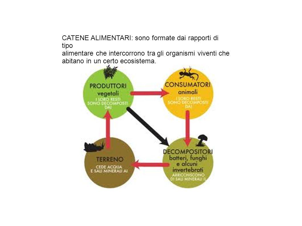 CATENE ALIMENTARI: sono formate dai rapporti di tipo alimentare che intercorrono tra gli organismi viventi che abitano in un certo ecosistema.