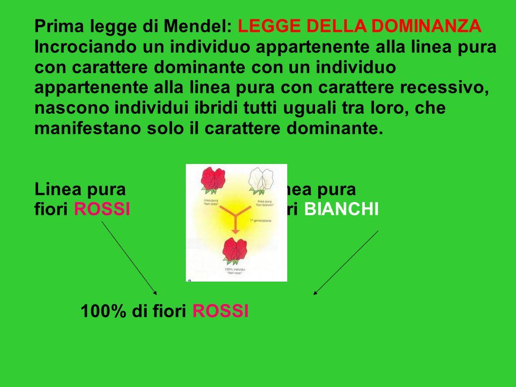 Prima legge di Mendel: LEGGE DELLA DOMINANZA Incrociando un individuo appartenente alla linea pura con carattere dominante con un individuo appartenen