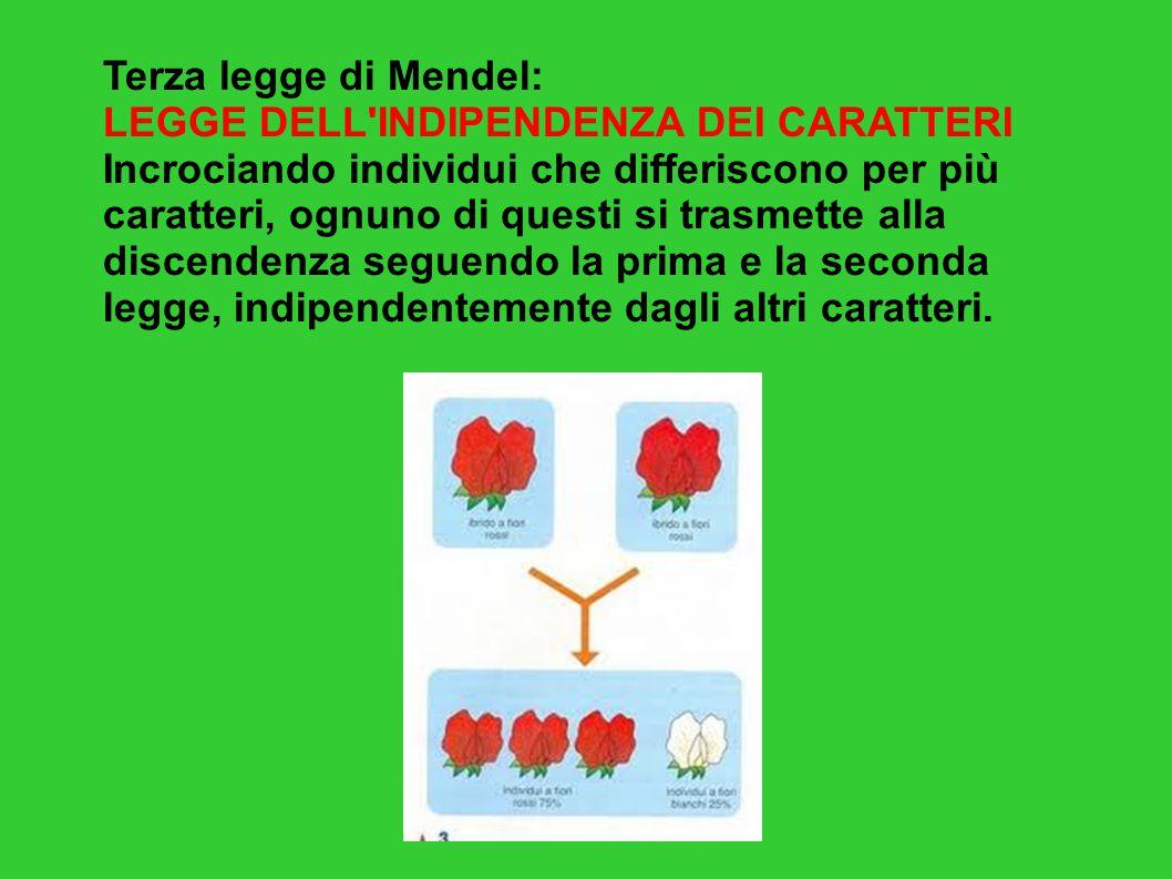 Terza legge di Mendel: LEGGE DELL'INDIPENDENZA DEI CARATTERI Incrociando individui che differiscono per più caratteri, ognuno di questi si trasmette a