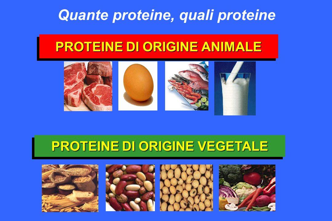 PROTEINE DI ORIGINE ANIMALE Quante proteine, quali proteine PROTEINE DI ORIGINE VEGETALE
