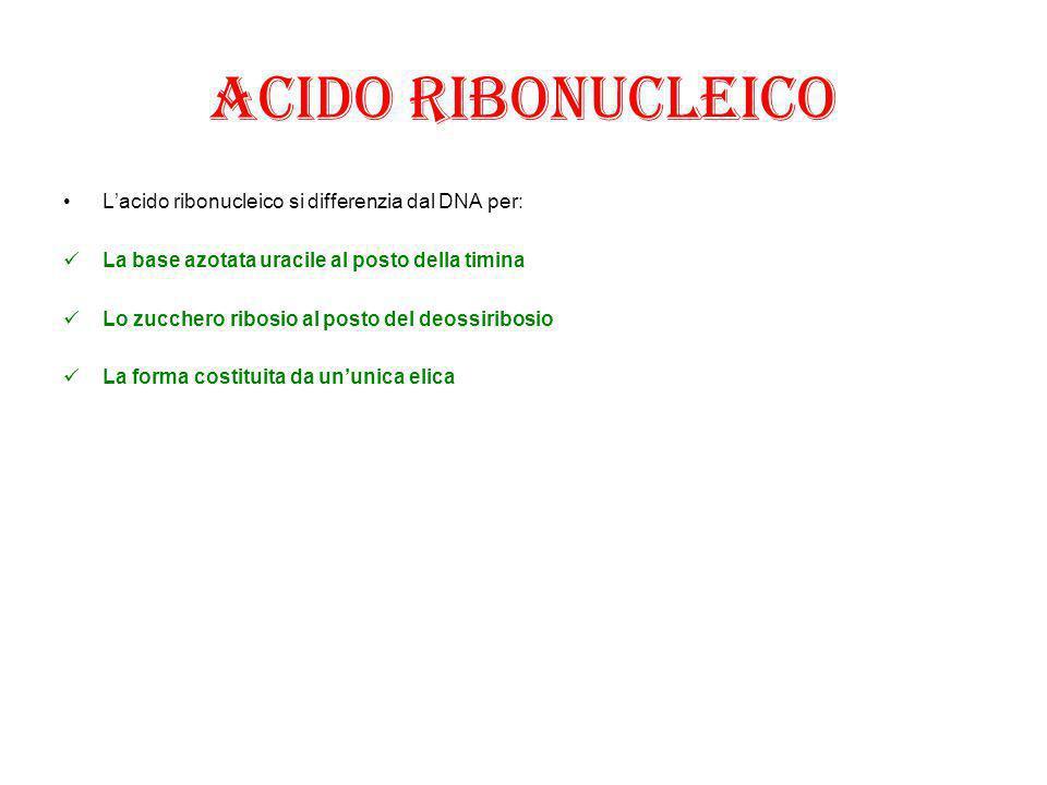 Acido ribonucleico L'acido ribonucleico si differenzia dal DNA per: La base azotata uracile al posto della timina Lo zucchero ribosio al posto del deo