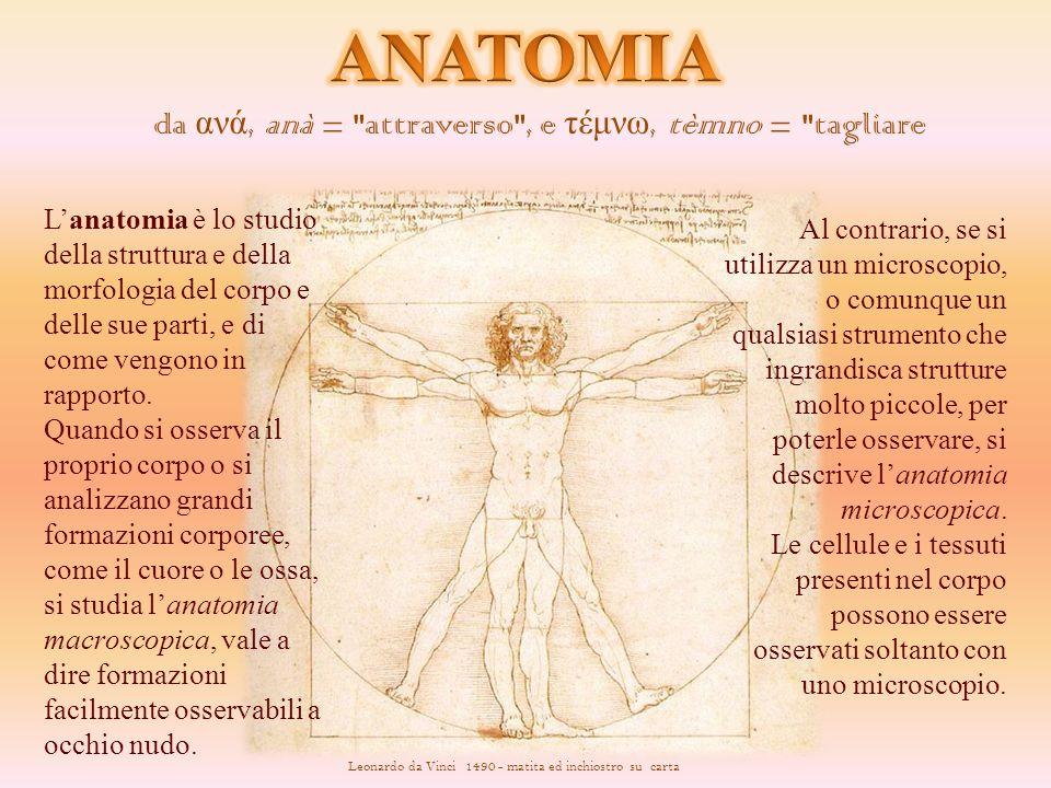 Leonardo da Vinci si accosta agli studi di Anatomia Umana attraverso l'Anatomia Artistica, praticata da alcuni pittori del '400, per meglio raffigurare il corpo umano.