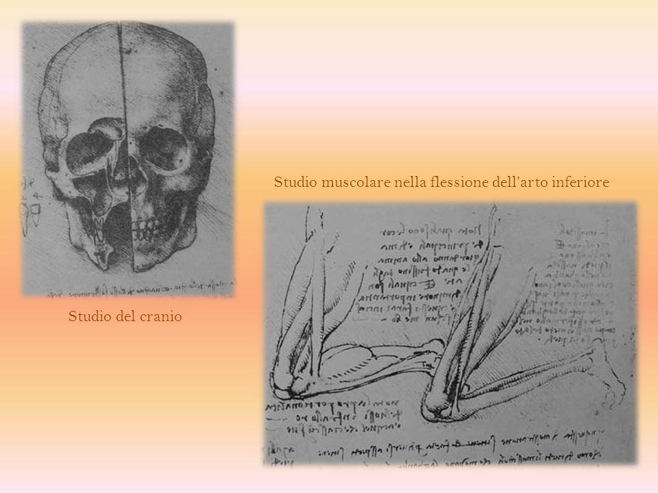 Studio dei visceri addominali Studio del sistema vascolare e biliare del fegato