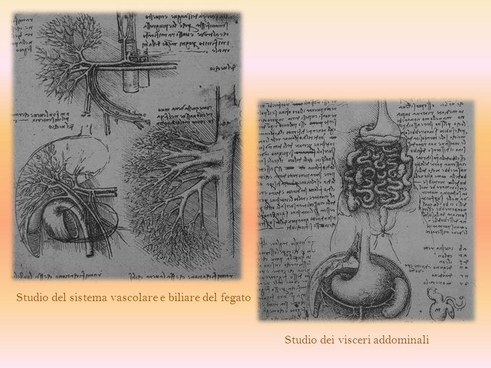 Per capire dove si trova una determinata struttura anatomica bisogna visualizzare il piano cui si fa riferimento.