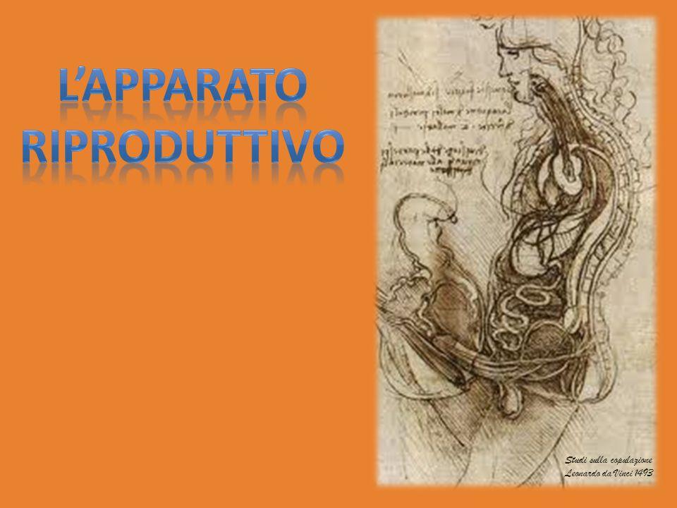 Studi sulla copulazione Leonardo da Vinci 1493