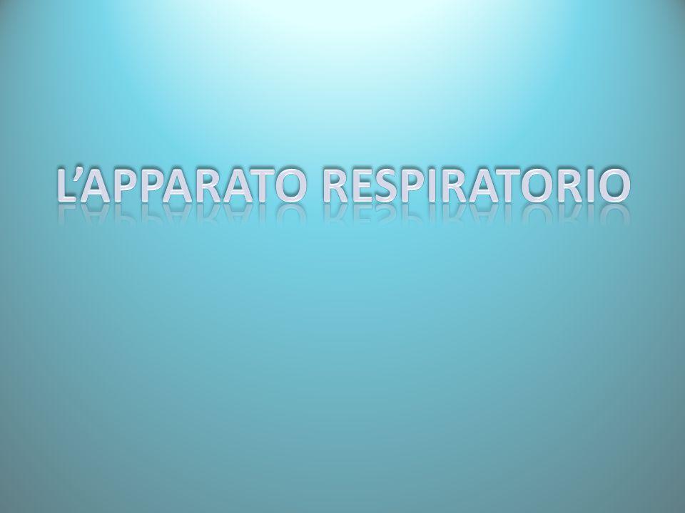 GENERALITÀ L'apparato respiratorio ha come scopo principale quello di estrarre dal corpo l'anidride carbonica (sostanza tossica di scarto del metabolismo cellulare) sostituendola con l'ossigeno, sostanza indispensabile ai processi cellulari che consentono di estrarre l'energia chimica contenuta nelle sostanze alimentari.
