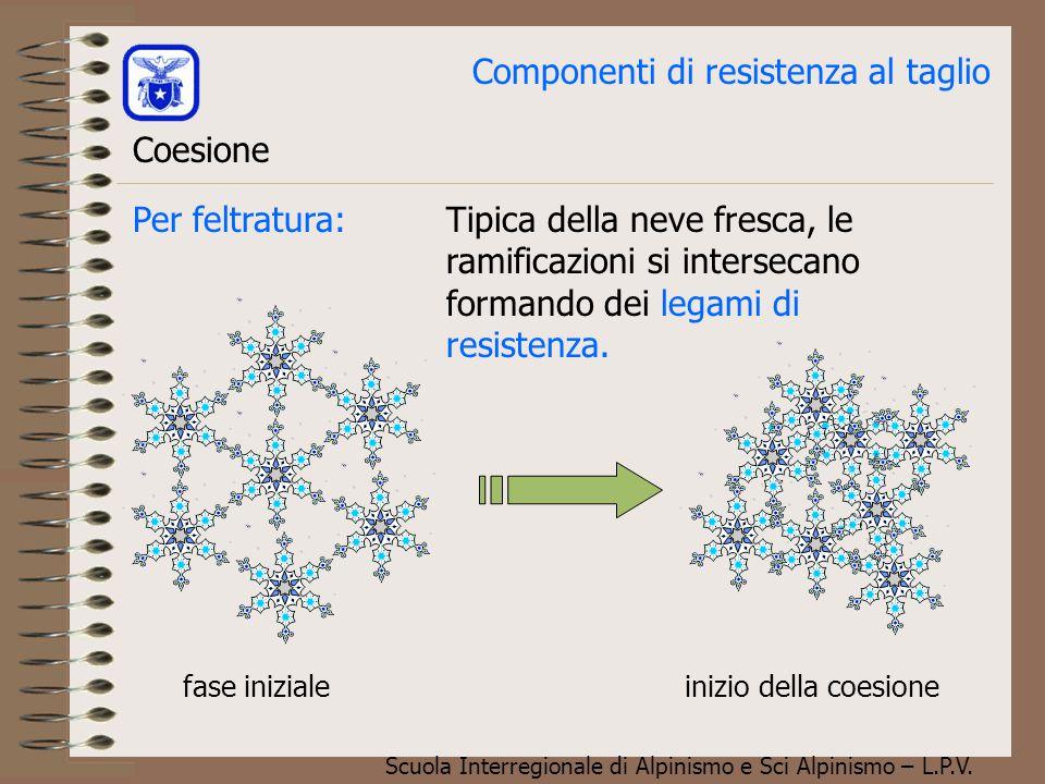 Scuola Interregionale di Alpinismo e Sci Alpinismo – L.P.V. Componenti di resistenza al taglio Coesione Quattro sono i tipi di coesione nella neve, og