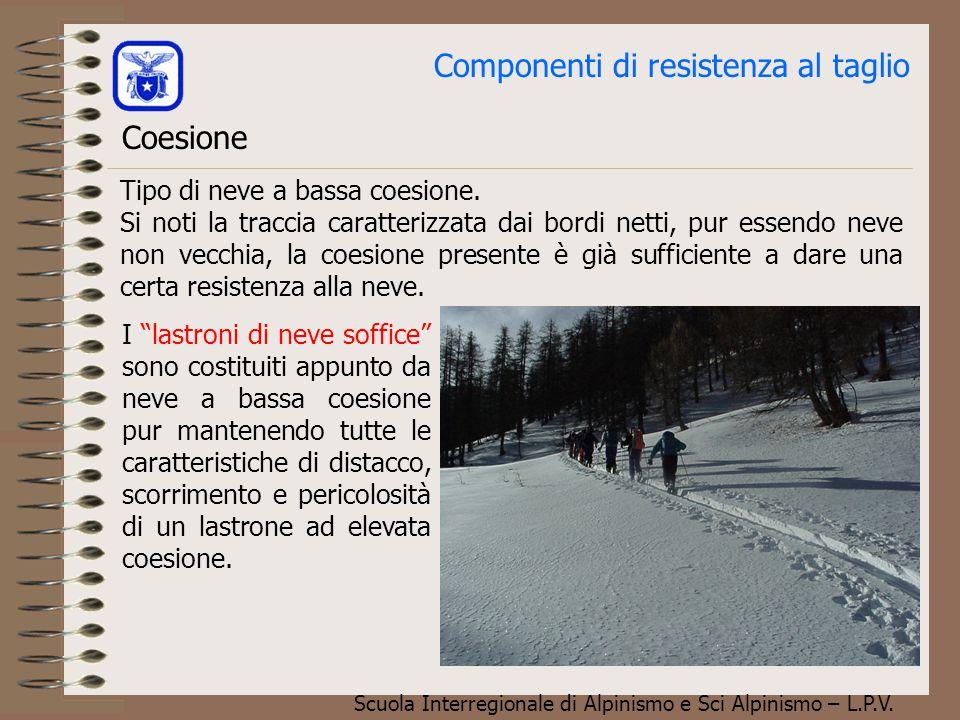 Scuola Interregionale di Alpinismo e Sci Alpinismo – L.P.V. Componenti di resistenza al taglio Coesione Per feltratura:Tipica della neve fresca, le ra
