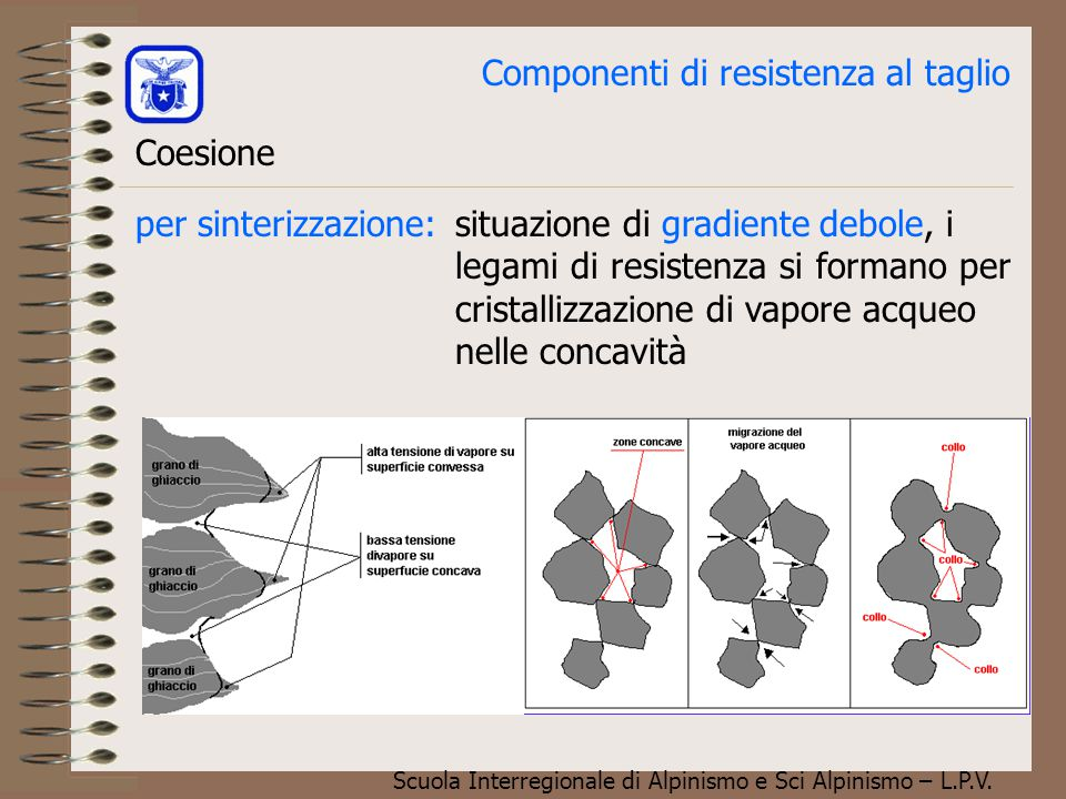 Scuola Interregionale di Alpinismo e Sci Alpinismo – L.P.V. Componenti di resistenza al taglio Coesione Tipo di neve a bassa coesione. Si noti la trac