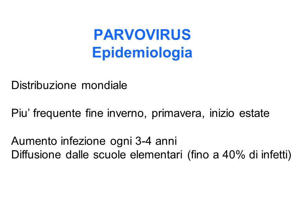 PARVOVIRUS Epidemiologia Distribuzione mondiale Piu' frequente fine inverno, primavera, inizio estate Aumento infezione ogni 3-4 anni Diffusione dalle