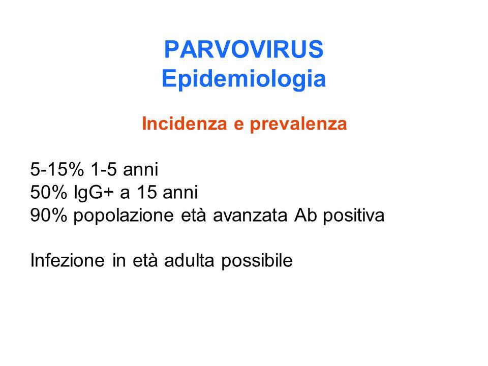 PARVOVIRUS Epidemiologia Incidenza e prevalenza 5-15% 1-5 anni 50% IgG+ a 15 anni 90% popolazione età avanzata Ab positiva Infezione in età adulta pos
