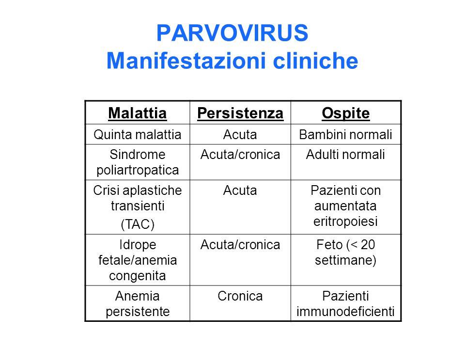 PARVOVIRUS Manifestazioni cliniche MalattiaPersistenzaOspite Quinta malattiaAcutaBambini normali Sindrome poliartropatica Acuta/cronicaAdulti normali