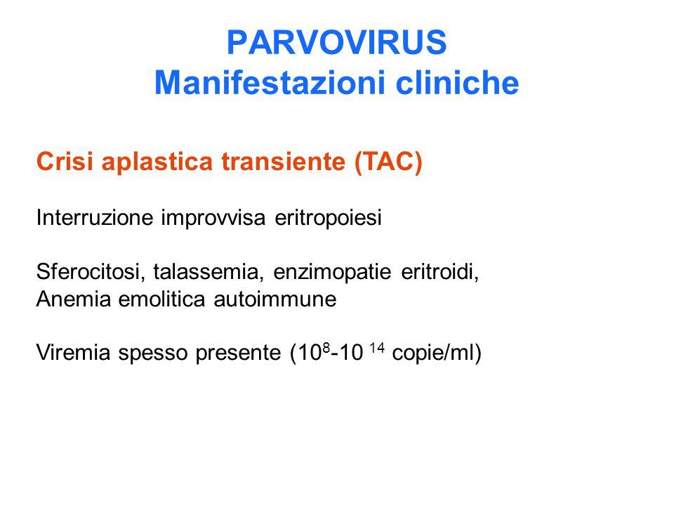 PARVOVIRUS Manifestazioni cliniche Crisi aplastica transiente (TAC) Interruzione improvvisa eritropoiesi Sferocitosi, talassemia, enzimopatie eritroid