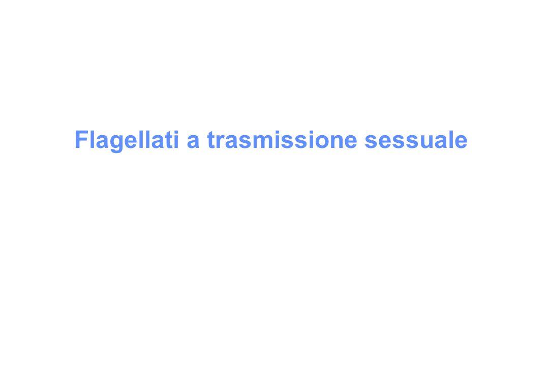 Flagellati a trasmissione sessuale