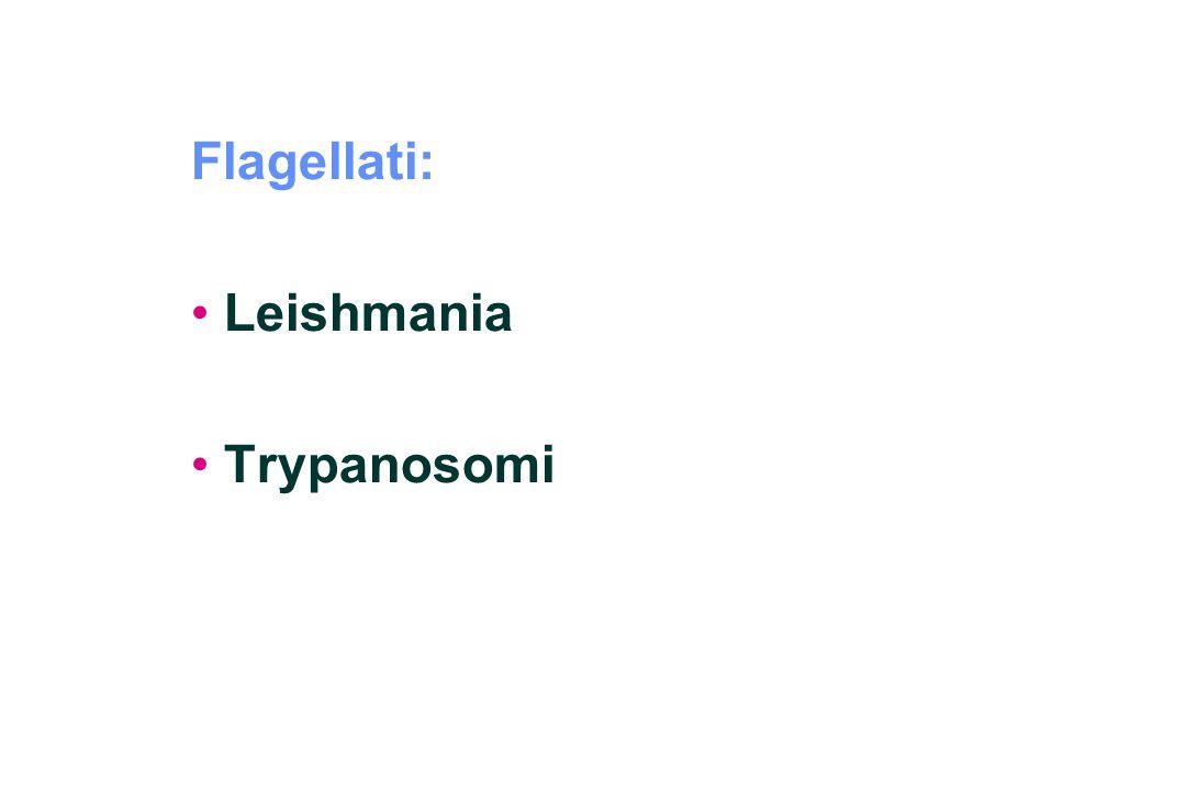 Flagellati: Leishmania Trypanosomi