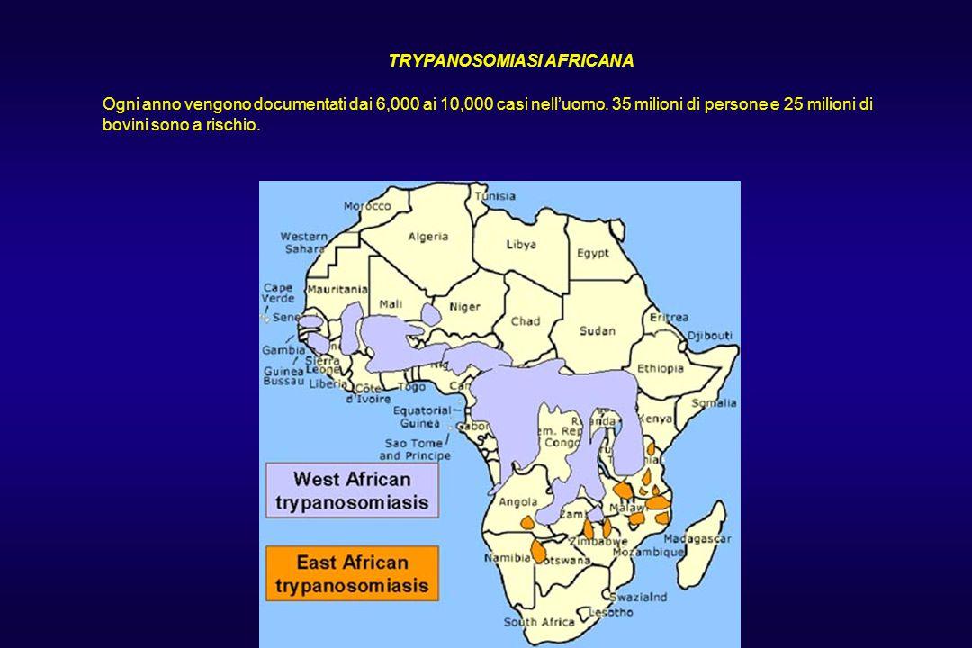 TRYPANOSOMIASI AFRICANA Ogni anno vengono documentati dai 6,000 ai 10,000 casi nell'uomo. 35 milioni di persone e 25 milioni di bovini sono a rischio.