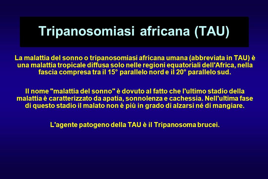 Tripanosomiasi africana (TAU) La malattia del sonno o tripanosomiasi africana umana (abbreviata in TAU) è una malattia tropicale diffusa solo nelle regioni equatoriali dell Africa, nella fascia compresa tra il 15° parallelo nord e il 20° parallelo sud.