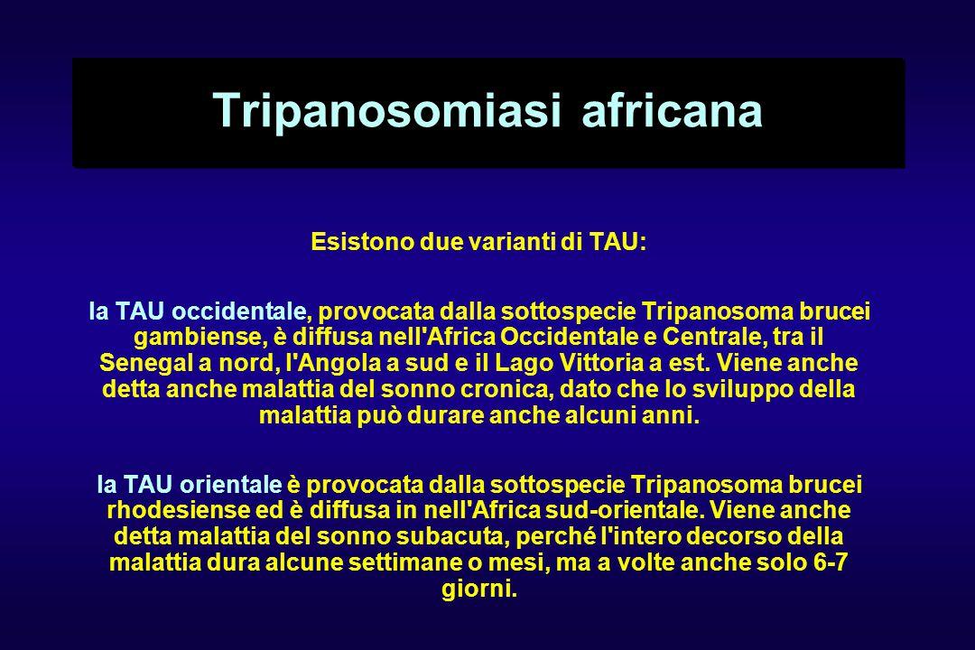 Tripanosomiasi africana Esistono due varianti di TAU: la TAU occidentale, provocata dalla sottospecie Tripanosoma brucei gambiense, è diffusa nell Africa Occidentale e Centrale, tra il Senegal a nord, l Angola a sud e il Lago Vittoria a est.