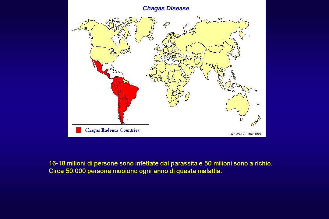 16-18 milioni di persone sono infettate dal parassita e 50 milioni sono a richio.