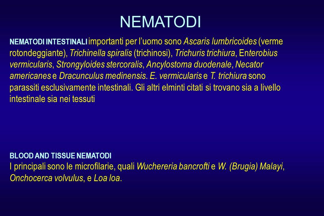NEMATODI INTESTINALI importanti per l'uomo sono Ascaris lumbricoides (verme rotondeggiante), Trichinella spiralis (trichinosi), Trichuris trichiura, En terobius vermicularis, Strongyloides stercoralis, Ancylostoma duodenale, Necator americanes e Dracunculus medinensis.