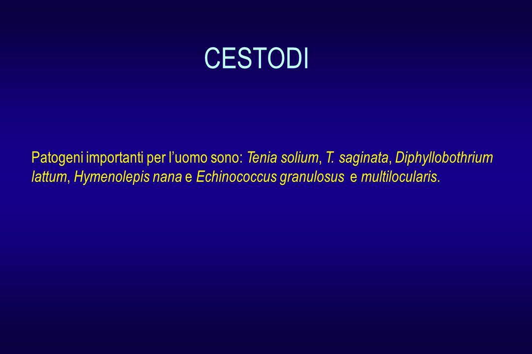 Patogeni importanti per l'uomo sono: Tenia solium, T. saginata, Diphyllobothrium lattum, Hymenolepis nana e Echinococcus granulosus e multilocularis.