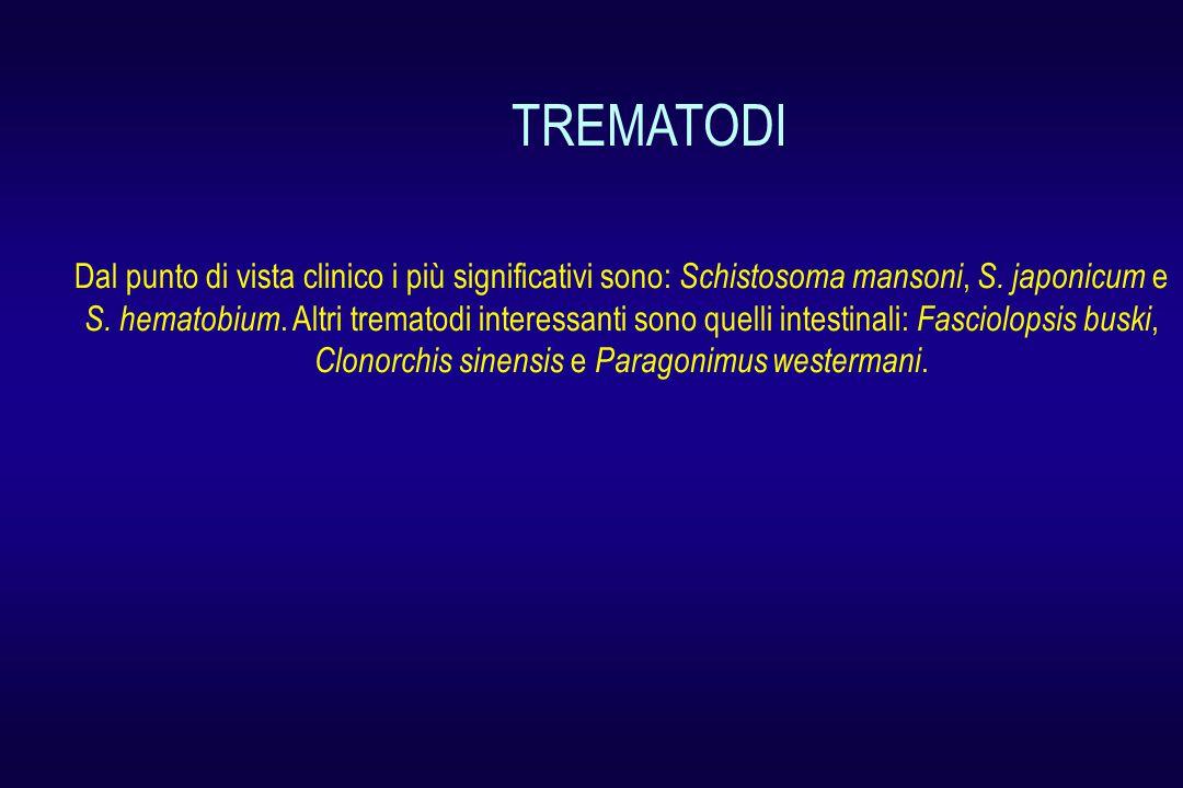 Dal punto di vista clinico i più significativi sono: Schistosoma mansoni, S.