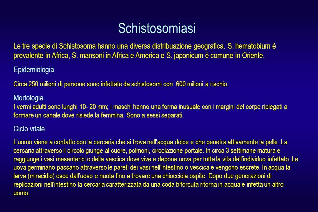 Schistosomiasi Le tre specie di Schistosoma hanno una diversa distribuazione geografica. S. hematobium è prevalente in Africa, S. mansoni in Africa e