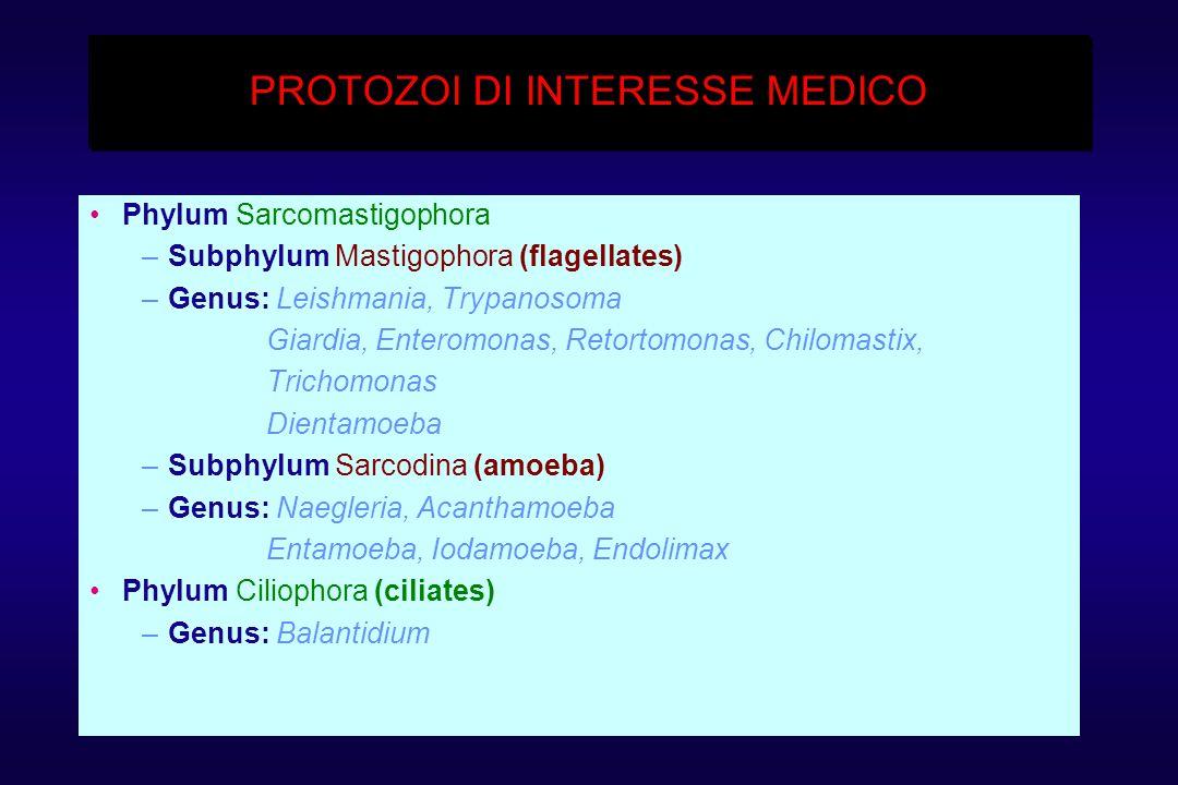 PROTOZOI DI INTERESSE MEDICO Phylum Sarcomastigophora –Subphylum Mastigophora (flagellates) –Genus: Leishmania, Trypanosoma Giardia, Enteromonas, Retortomonas, Chilomastix, Trichomonas Dientamoeba –Subphylum Sarcodina (amoeba) –Genus: Naegleria, Acanthamoeba Entamoeba, Iodamoeba, Endolimax Phylum Ciliophora (ciliates) –Genus: Balantidium