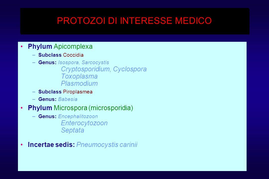 PROTOZOI DI INTERESSE MEDICO Phylum Apicomplexa –Subclass Coccidia –Genus: Isospora, Sarcocystis Cryptosporidium, Cyclospora Toxoplasma Plasmodium –Subclass Piroplasmea –Genus: Babesia Phylum Microspora (microsporidia) –Genus: Encephalitozoon Enterocytozoon Septata Incertae sedis: Pneumocystis carinii