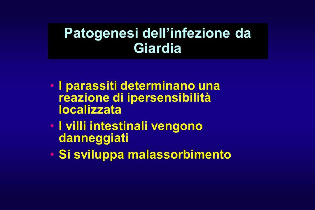 Patogenesi dell'infezione da Giardia I parassiti determinano una reazione di ipersensibilità localizzata I villi intestinali vengono danneggiati Si sviluppa malassorbimento