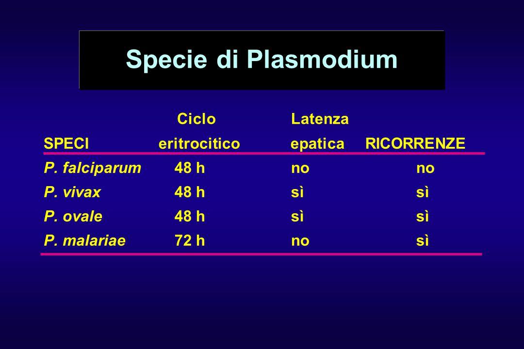 Specie di Plasmodium Ciclo Latenza SPECI eritrocitico epatica RICORRENZE P. falciparum48 hnono P. vivax48 hsìsì P. ovale48 hsì sì P. malariae72 hnosì