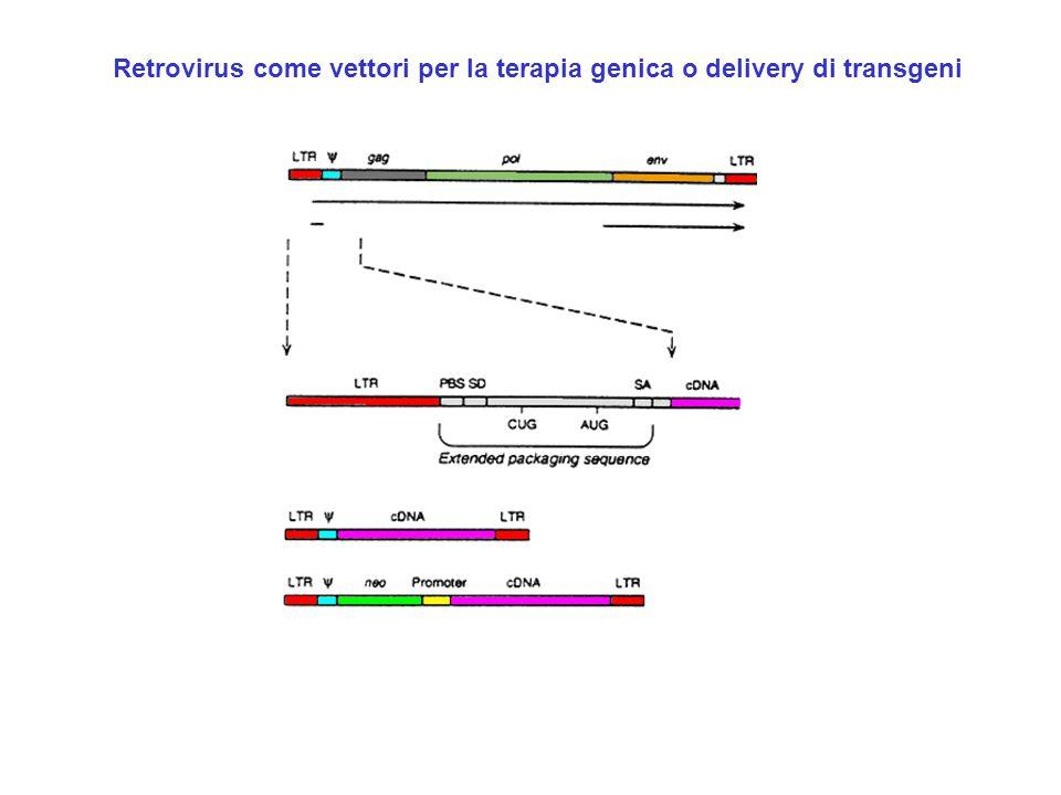 Retrovirus come vettori per la terapia genica o delivery di transgeni