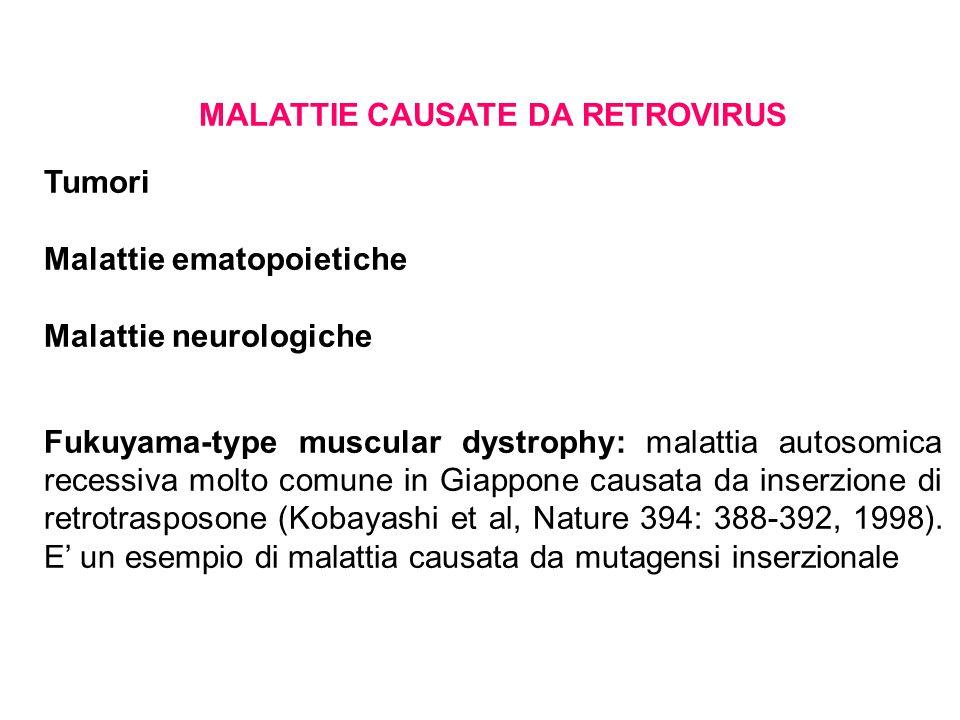 MALATTIE CAUSATE DA RETROVIRUS Tumori Malattie ematopoietiche Malattie neurologiche Fukuyama-type muscular dystrophy: malattia autosomica recessiva molto comune in Giappone causata da inserzione di retrotrasposone (Kobayashi et al, Nature 394: 388-392, 1998).