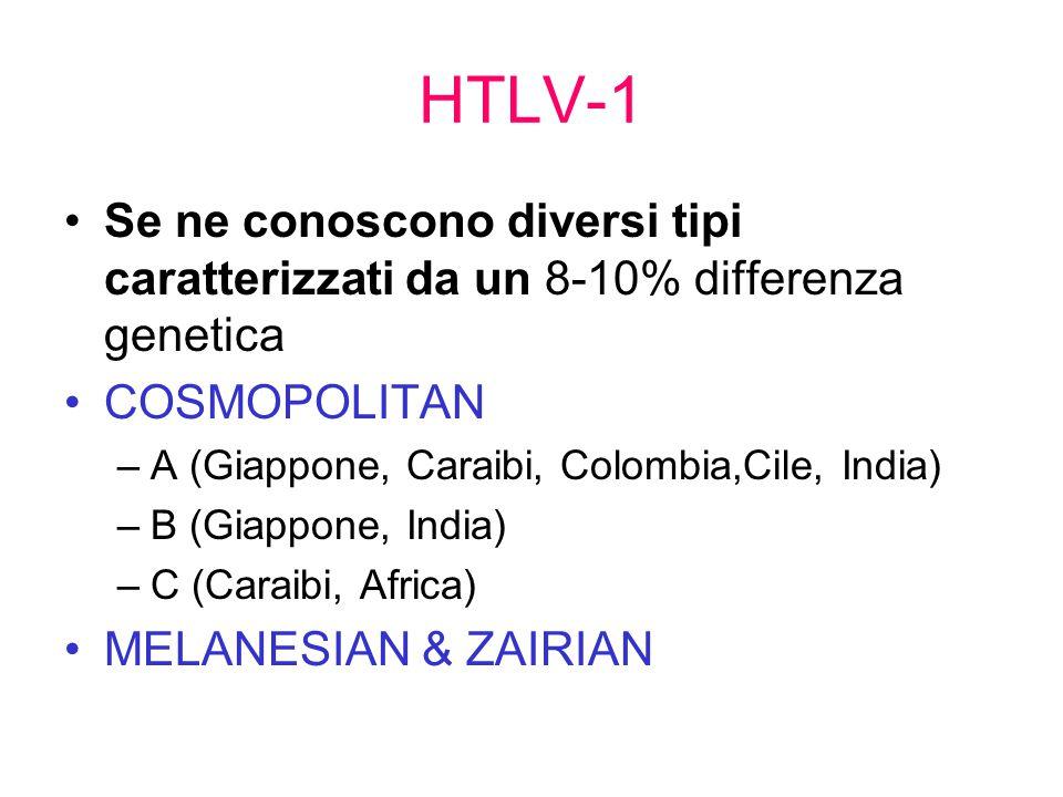 HTLV-1 Se ne conoscono diversi tipi caratterizzati da un 8-10% differenza genetica COSMOPOLITAN –A (Giappone, Caraibi, Colombia,Cile, India) –B (Giappone, India) –C (Caraibi, Africa) MELANESIAN & ZAIRIAN