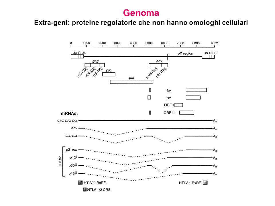 Genoma Extra-geni: proteine regolatorie che non hanno omologhi cellulari