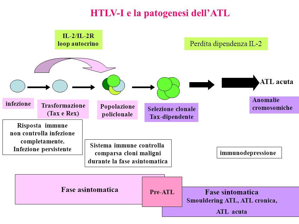 infezione Trasformazione (Tax e Rex) Popolazione policlonale ATL acuta Selezione clonale Tax-dipendente Risposta immune non controlla infezione completamente.