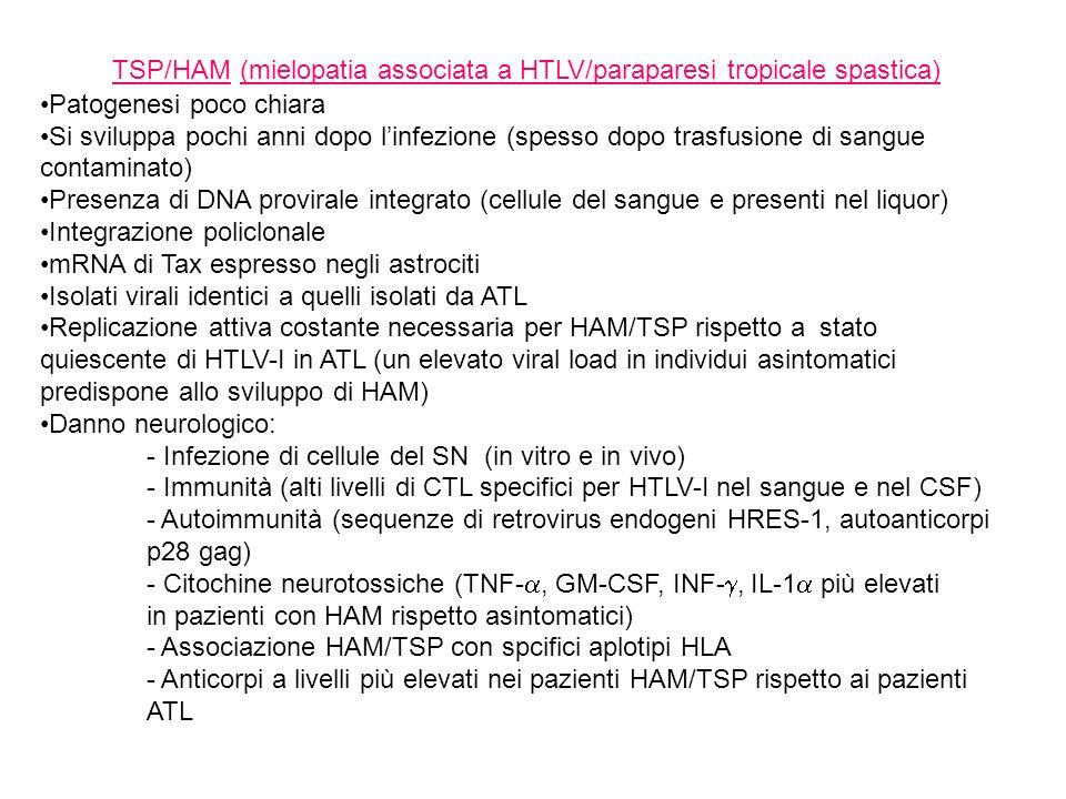 TSP/HAM (mielopatia associata a HTLV/paraparesi tropicale spastica) Patogenesi poco chiara Si sviluppa pochi anni dopo l'infezione (spesso dopo trasfusione di sangue contaminato) Presenza di DNA provirale integrato (cellule del sangue e presenti nel liquor) Integrazione policlonale mRNA di Tax espresso negli astrociti Isolati virali identici a quelli isolati da ATL Replicazione attiva costante necessaria per HAM/TSP rispetto a stato quiescente di HTLV-I in ATL (un elevato viral load in individui asintomatici predispone allo sviluppo di HAM) Danno neurologico: - Infezione di cellule del SN (in vitro e in vivo) - Immunità (alti livelli di CTL specifici per HTLV-I nel sangue e nel CSF) - Autoimmunità (sequenze di retrovirus endogeni HRES-1, autoanticorpi p28 gag) - Citochine neurotossiche (TNF- , GM-CSF, INF- , IL-1  più elevati in pazienti con HAM rispetto asintomatici) - Associazione HAM/TSP con spcifici aplotipi HLA - Anticorpi a livelli più elevati nei pazienti HAM/TSP rispetto ai pazienti ATL